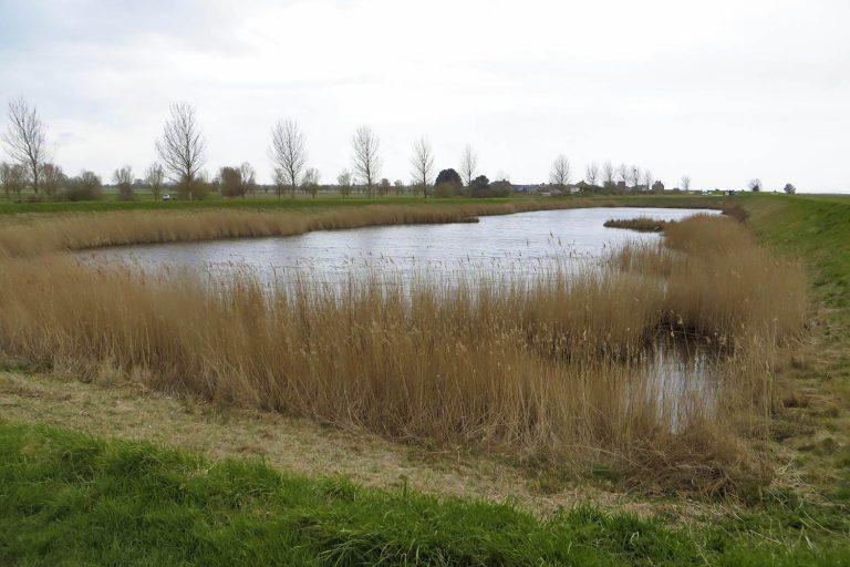 étang Saint-Broladre